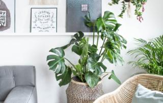 végétaux en décoration