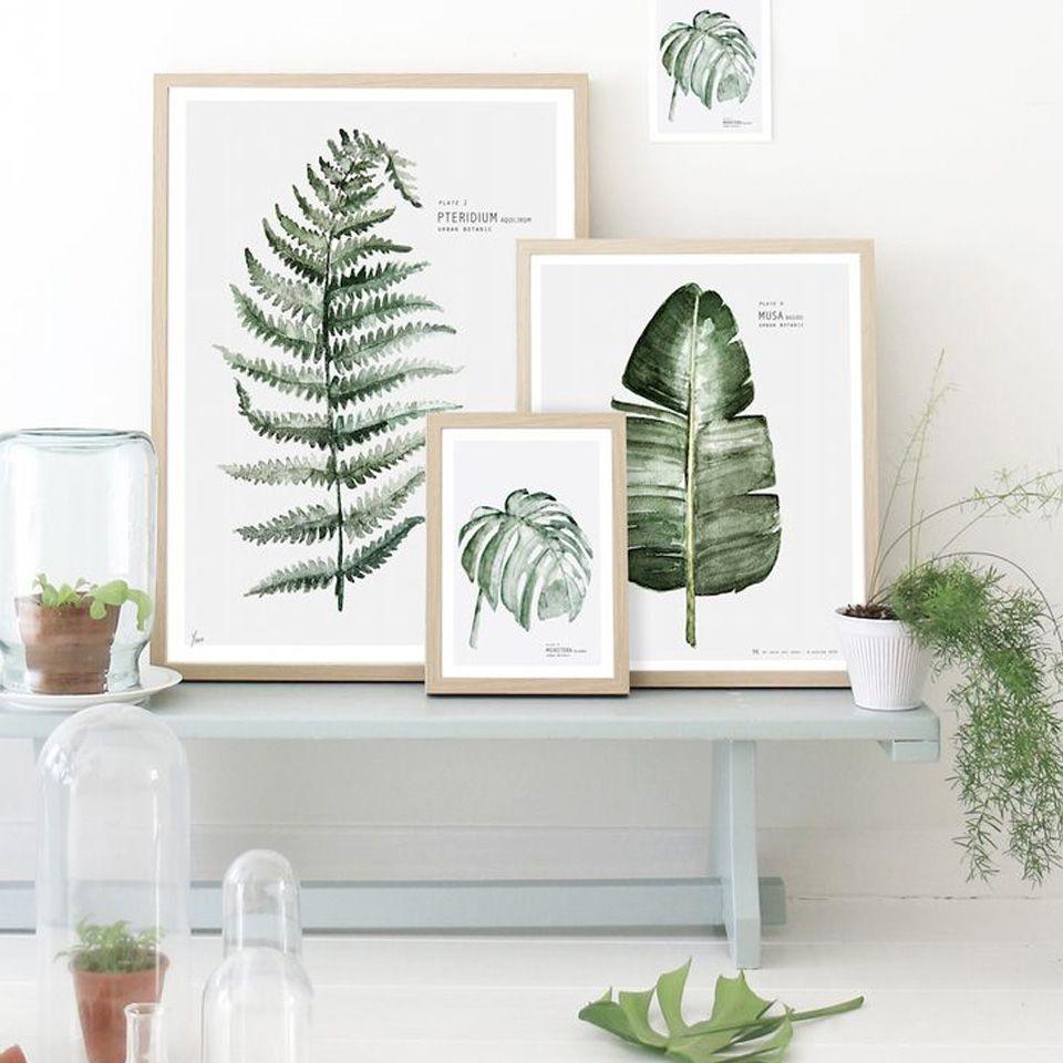 Végétaux imagés encadrés