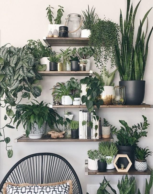Plantes vertes mises en valeur sur des étagères murales