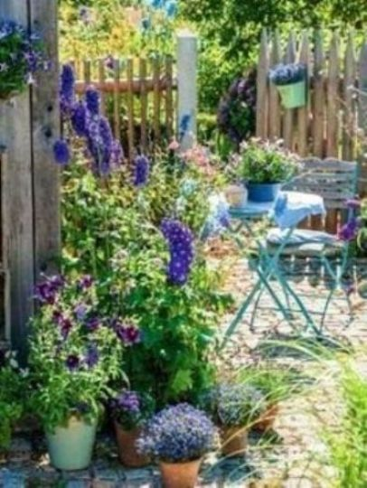 Plantes fleuries pour terrasse